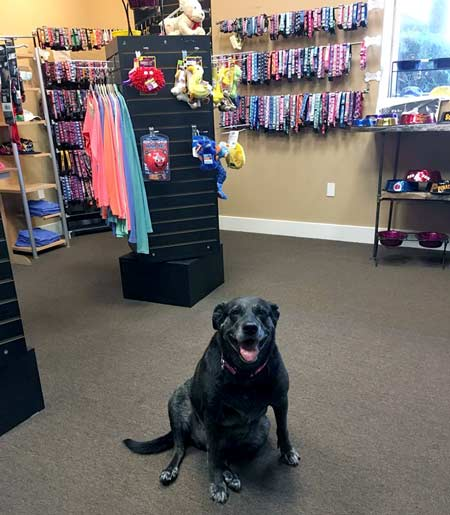 dog sitting in shop